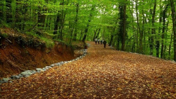 Cendere Vadisi | Belgrad Ormanı
