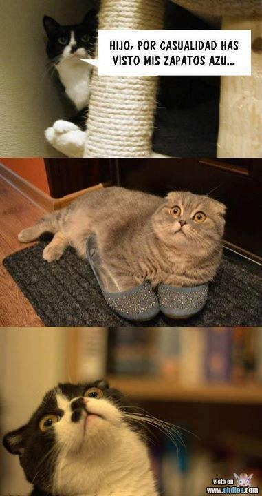 ¡Ese gatito es todo un loquillo jajaja!.