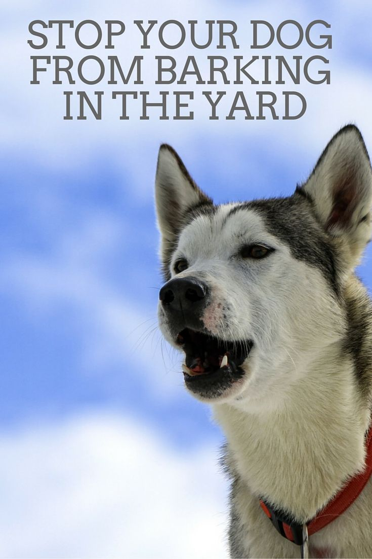 How to stop a dog from barking in the yard