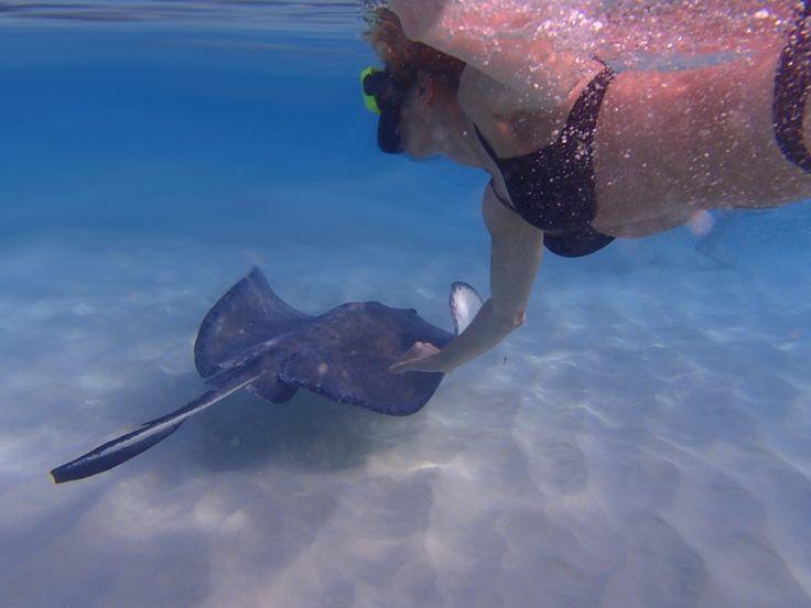 Reisebericht: Schwimmen mit den Stachelrochen in der Stingray City von Grand Cayman