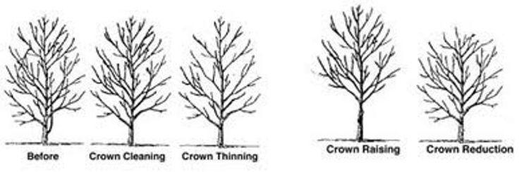 Tree Removal Brisbane experts in tree services like http://www.arborlogic.net/tree-removal-brisbane/