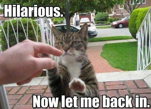 cute animals pictures with captions   ... Awww: Cute animals + captions = win! (35 photos) » cute-captions-7