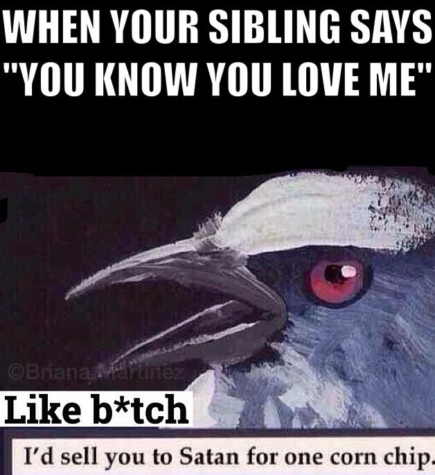 ff09d64873a35c2f3d31a71c54e33a5d annoying siblings growing up with siblings funny best 25 siblings funny ideas only on pinterest siblings, so,Brother Memes Funny