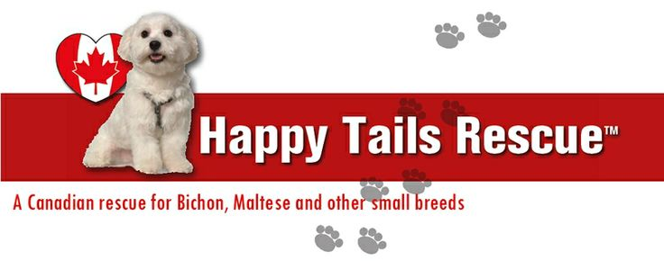 HTR July Newsletter #happytailsrescue #htr #smallbreedrescue