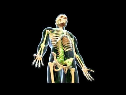 99easyrecipes | Bone Cancer Symptoms in Humans | How to Diagnose Arthritis
