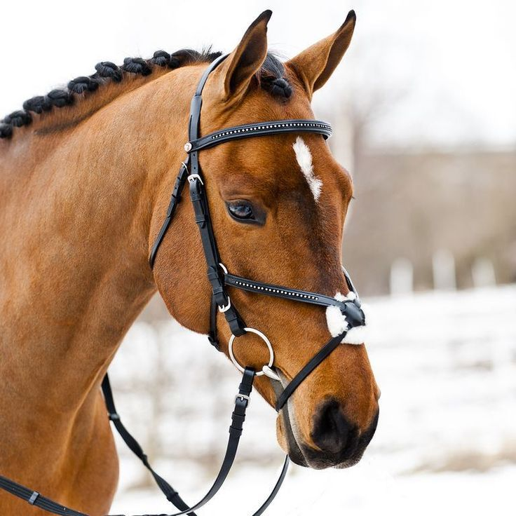 Ashbree Saddlery - Mexican Figure 8 Bridle, $89.00 (http://www.ashbree.com.au/for-the-horse/bridles-browbands/bridles/mexican-figure-8-bridle/)