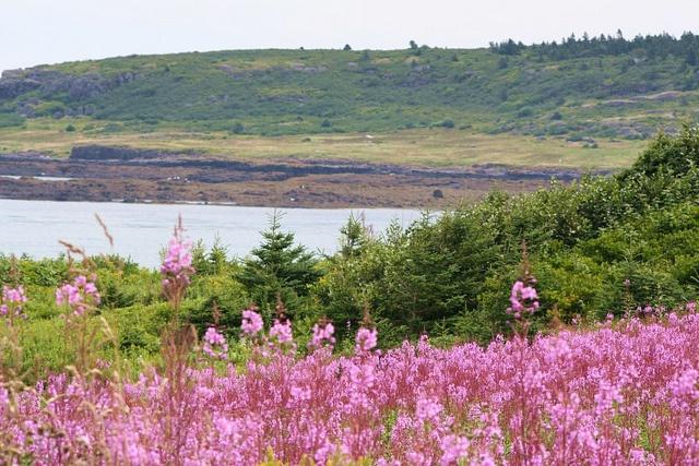 Brier Island, NS