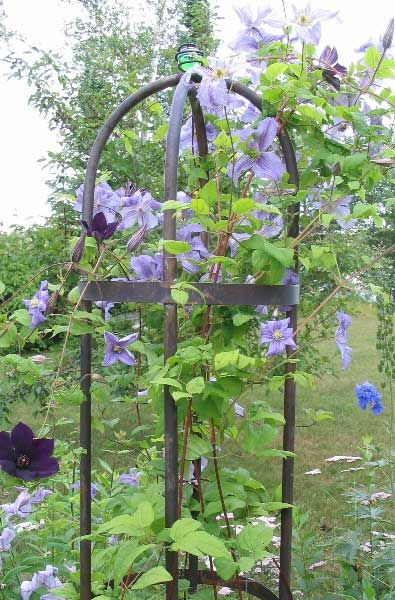A Very Simple But Nice Copper Pipe Obelisk Trellis How