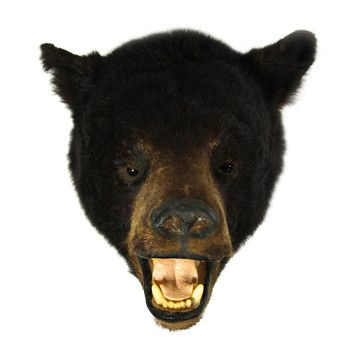 Phat Heads: Bear Head, at 21% off!