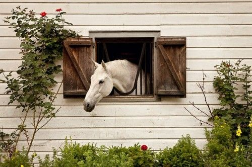 *Just smelling the roses~: Hors Barns, Dreams Barns, Rose, Dreams Home, Shutters Window, Hors Photography, Beautiful Baby, Pictures Perfect, Make Me Smile