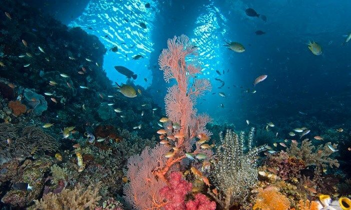 ikan hias air tawar teindah di dunia