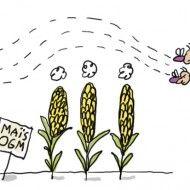 1jour1actu : C'est quoi, les OGM ?