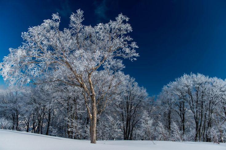 GALA Yuzawa | Yuzawa Town | Niigata Prefecture | Resort Spotlight | Japan ski and snowboard resorts | SnowJapan