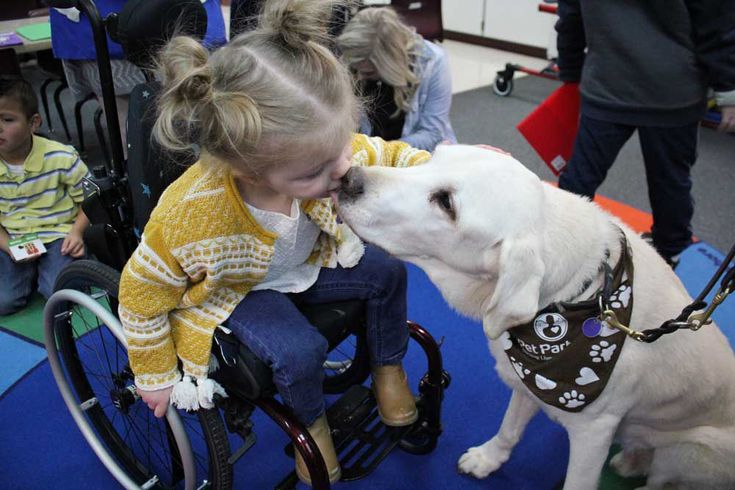 Therapy dogs help students 'focus and find calm within themselves'