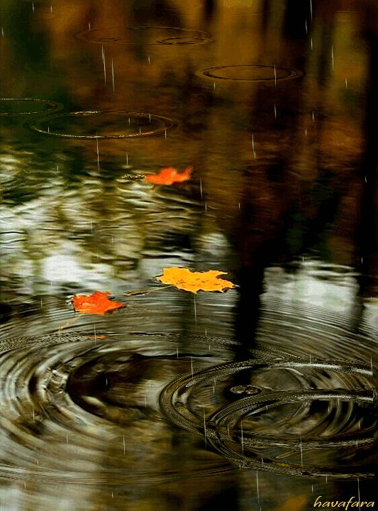 дождь это движущиеся картинки постоянно