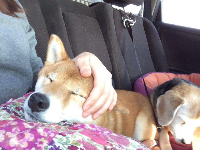 遊び疲れて眠っちゃいました