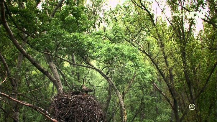 Az ártéri erdő titkai 720p