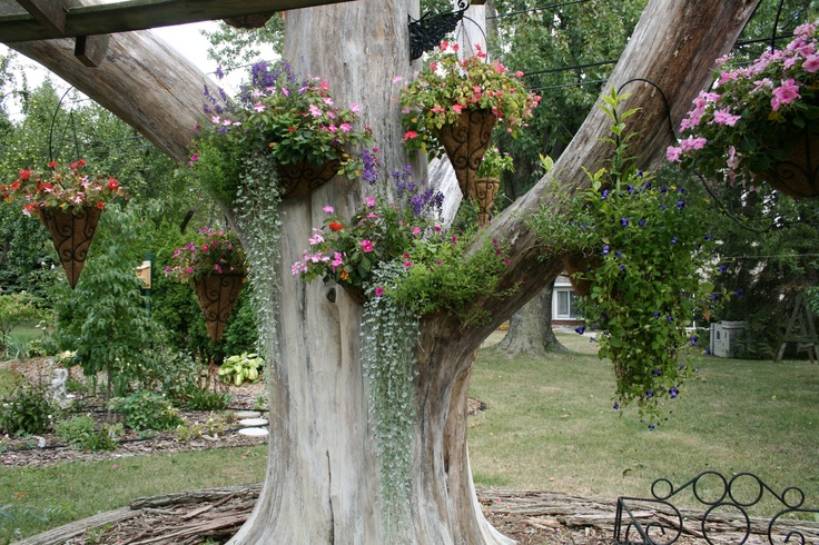 1000 images about tree trunk on pinterest shutterfly tree trunks and trees - Flowers that grow on tree trunks ...