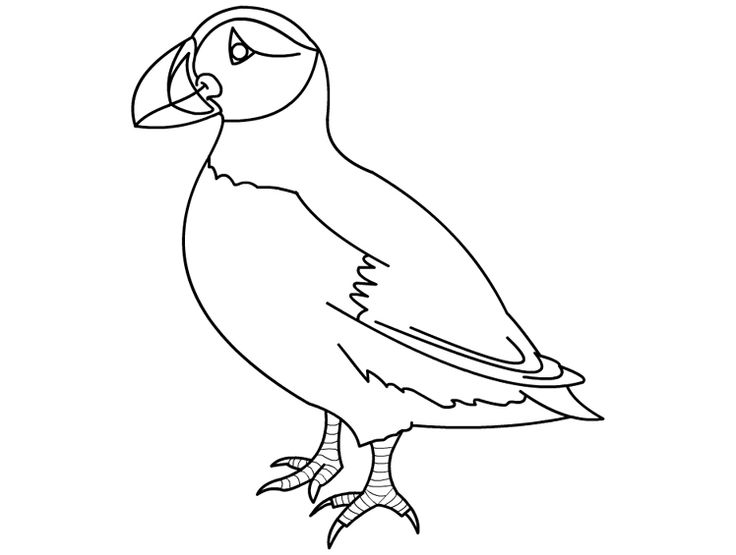 43 best images about my compassion puffin on pinterest for Puffin coloring pages to print
