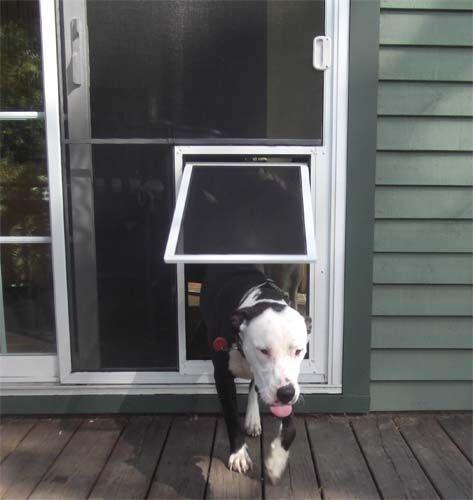 The 25 Best Pet Screen Door Ideas On Pinterest Dog
