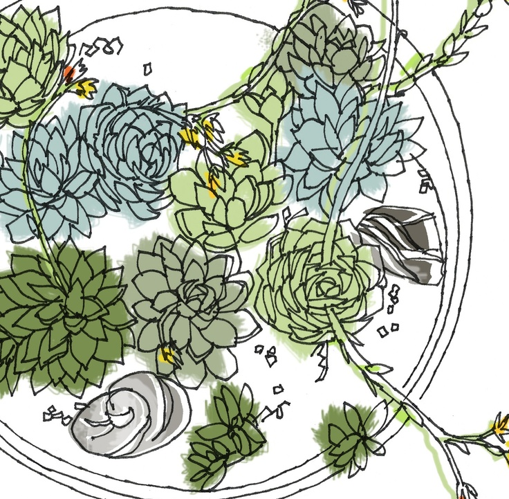 Line Drawing Garden : Hen and chicks succulent container garden line drawing
