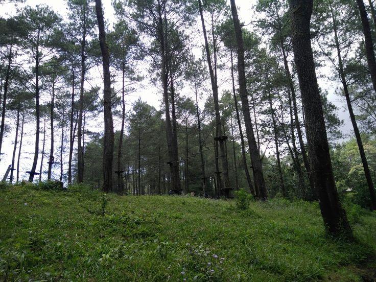 Tree top adventures Lembang