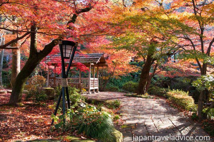 Autumn Colors at Gifu Park