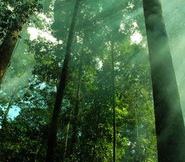 Hanya Catatan Biasa: Taman Nasional Indonesia Yang Masuk Situs Warisan ...