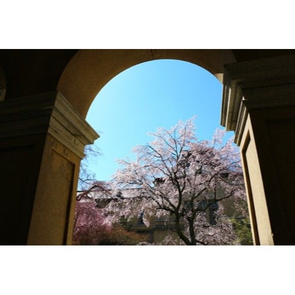 【kimamanasanpomichi】さんのInstagramをピンしています。 《京都・上京区・京都府庁旧本館 【2014年3月】  #京都 #kyoto  #桜 #花  #青空 #blue_sky  #ファインダー越しの私の世界  #写真好きな人と繋がりたい  #写真撮ってる人と繋がりたい  #photography》