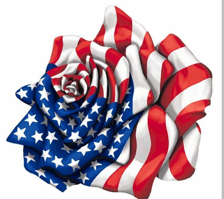 American flag rose                                                                                                                                                                                 More