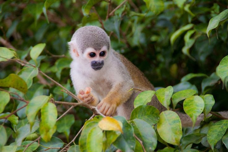 Monkey in Ecuador - 10 Reasons to Visit South America