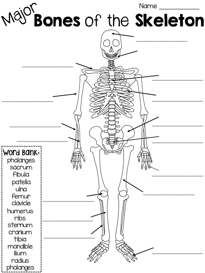 (Major) Bones of the Skeleton quiz with word bank