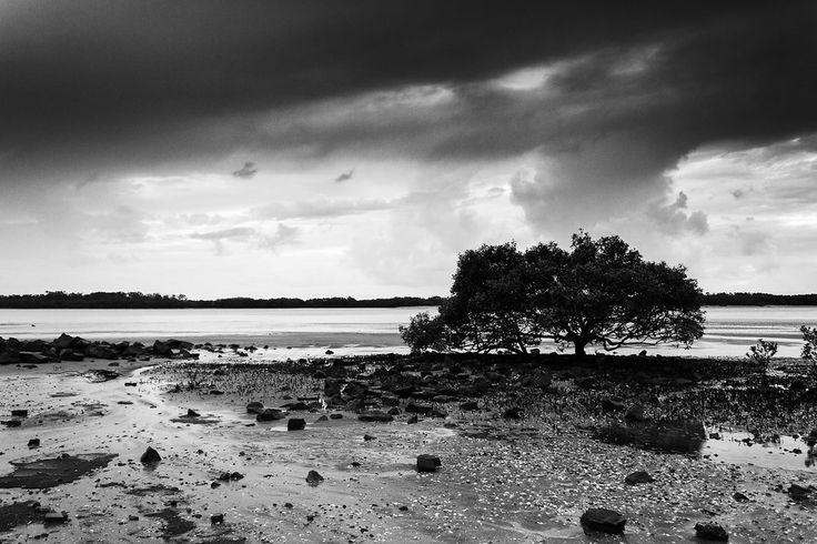 Tree on a Beach - Brighton, Brisbane, Australia - Zac Harney Photography