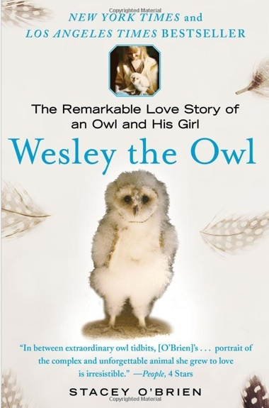 37 best kids owl books images on pinterest kid books baby books owl book ever if you love owls you must read this fandeluxe Choice Image