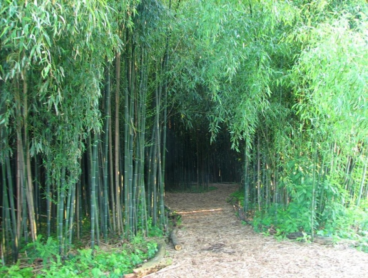 Good Bamboo Garden Nj Bamboo Forest Rutgers Garden New Brunswick Nj New