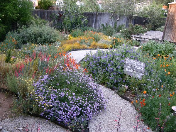 25 best ideas about california native garden on pinterest for Native plant garden designs