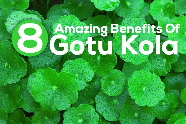 Gotu Kola is a small herbaceous plant that grows in swampy areas. Used as a herbal medication, it offers many benefits for skin, hair & health. Read to know.