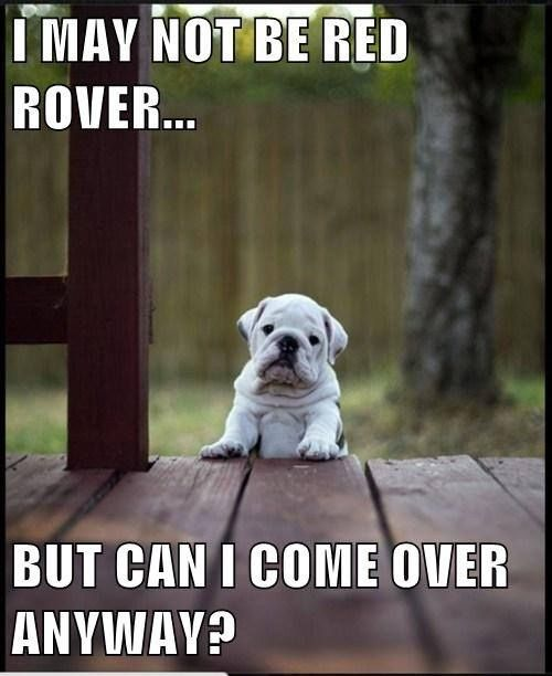 I may not be Red Rover... cute animals quote dog puppy bulldog cute animals dog quote