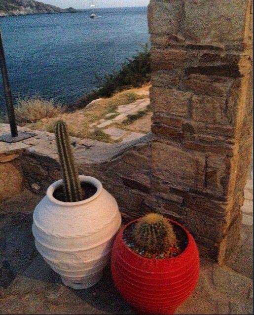 cutest cactus in Harmony restaurant in Ios, Greece