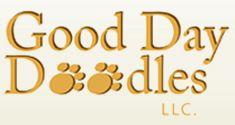 Australian Labradoodle Adoption Process | Australian Labradoodle Puppies nc 2700