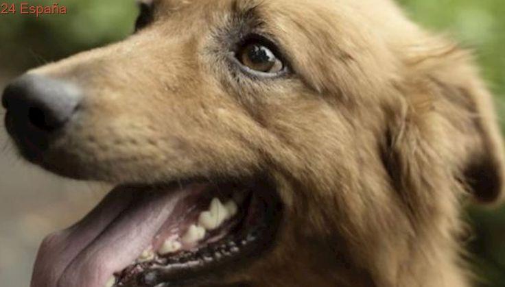 California se plantea suprimir los criaderos de perros
