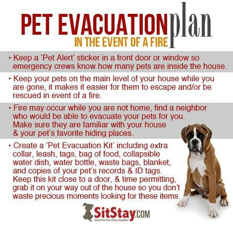 47 Best Safety For Pets Images On Pinterest Pet Health