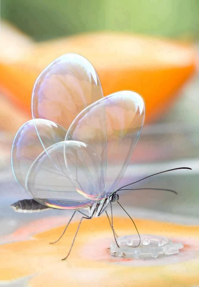 Translucent Butterfly                                                                                                                                                                                 Plus