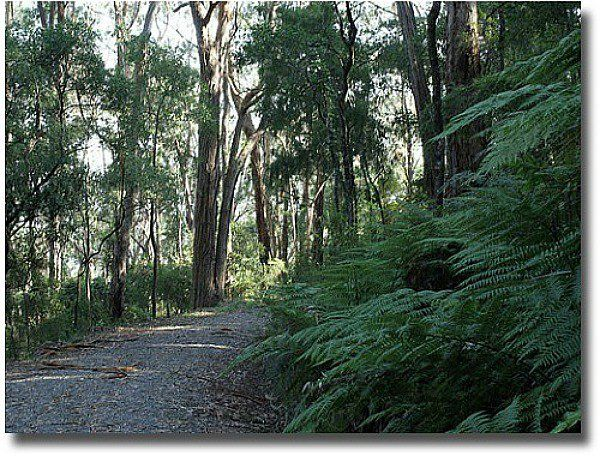 Mount Dandenong forest path compliments of http://www.flickr.com/photos/dey/13932729/