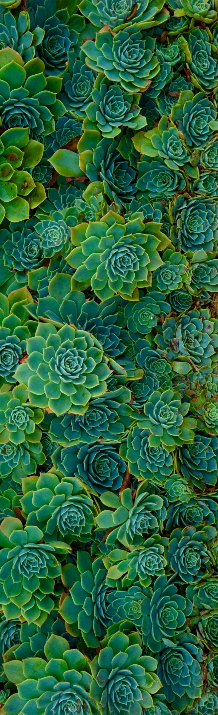 <3 Succulents~ I Have Managed To Grow A Ton Of These the Past Two Years~ Kimberly Stanley