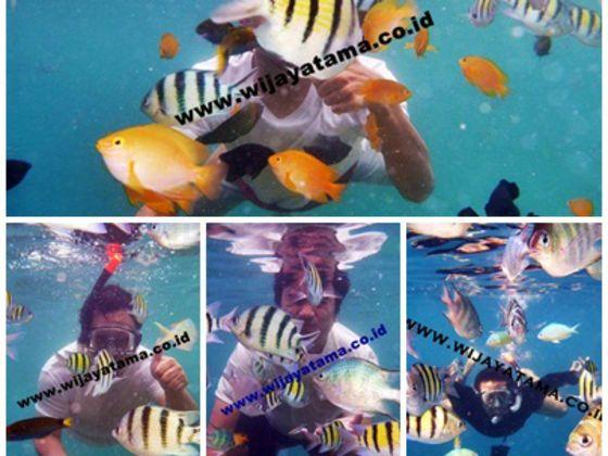 Pulau Seribu ,,, Paket Promo Wisata Pulau Seribu Free Snorkeling - Paket Meeting, Paket Outing, Paket Outbound, Paket Family Gathering, paket Memancing - Wijayatama.co.id Telp: +622168274005 / +628159977449