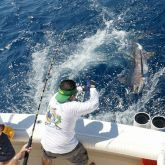 From local waters to the deep sea, our fishing charter can take you to the best spots around Cabo San Lucas. Click here to book your adventurous Fishing Cabo San Lucas today!     #FishingCaboSanLucas