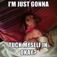 tuck myself in: Colleges, Dogs, Funny, Tucks, Princesses, Book Jackets, Brownies, All, Dachshund Doxi