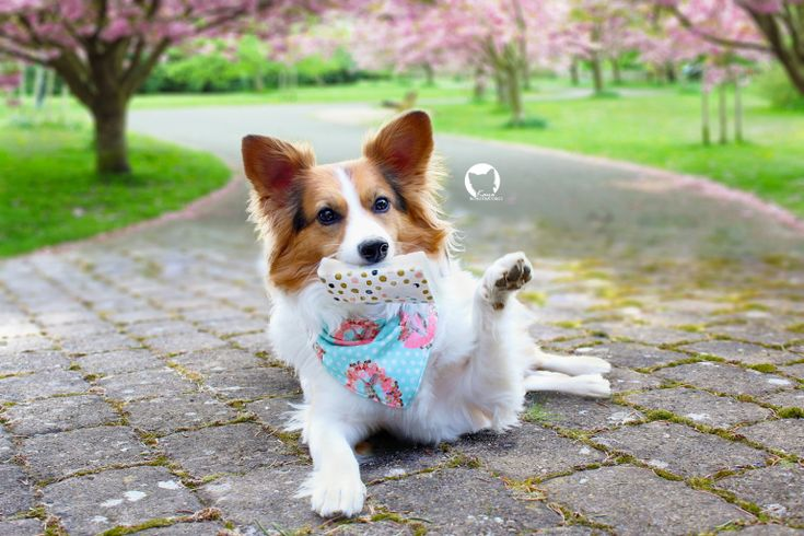 Hatschi Hund