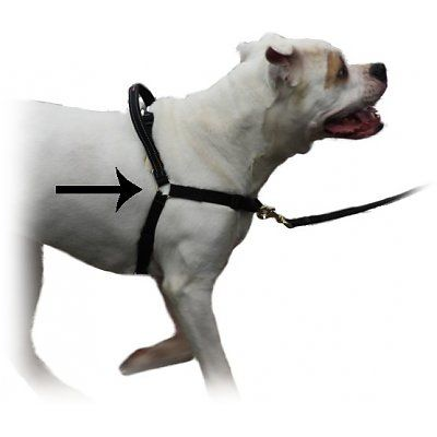 maZter Hondentuig Anti trektuig
